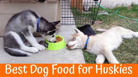 best affordable puppy food best affordable food 2017 a comprehensive guide pet supplies