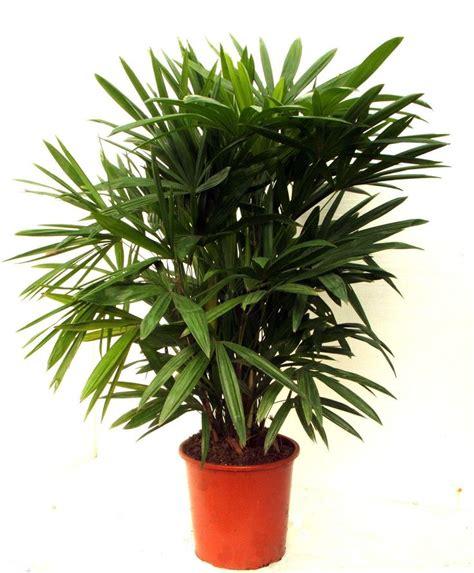 air purifying plants  nasa ratings