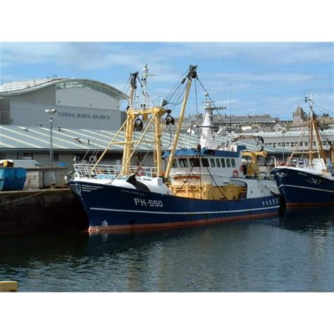 size matters plymouth the ecological importance of fish in focus