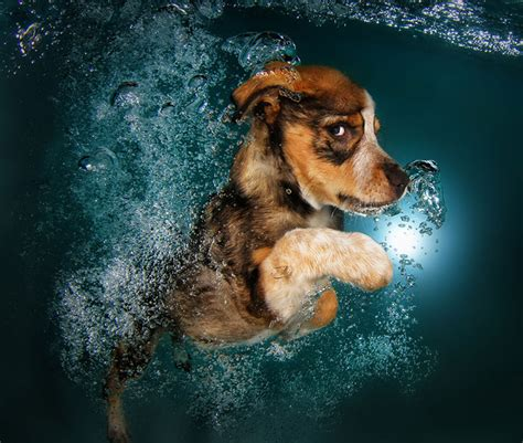 puppies underwater underwater puppies new photo series by seth casteel