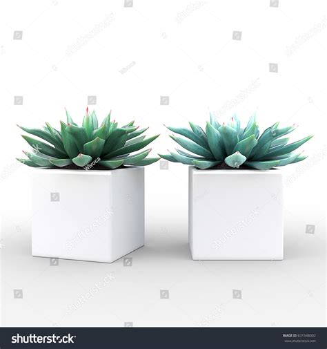 small potted cactus plants stock photo image 68600366 small potted plant succulents white cube stock