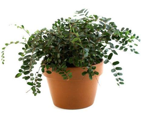 keeping  pets safe   toxic house plants pets