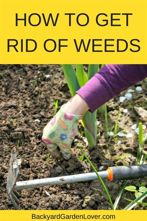 how to get rid of weeds in flower beds how to get rid of weeds for good