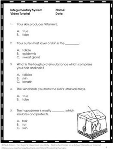 Chapter 5 The Integumentary System Worksheet Answers by Integumentary System Worksheet Worksheets For School