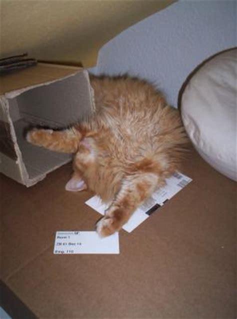 wie lange schlafen katzen wie schlafen eure katzen hund katze maus forum