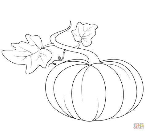pumpkin leaf coloring pages 62 best autumn draw images on pinterest fall leaves and