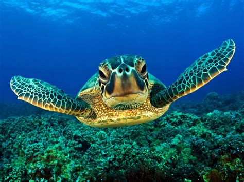 turtle pictures land abd sea turtle wallpapers