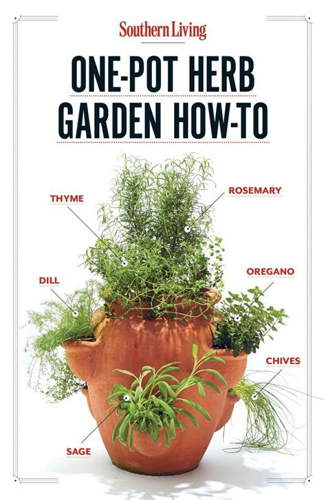 how to grow herbs 29 best images about tv garden center on pinterest