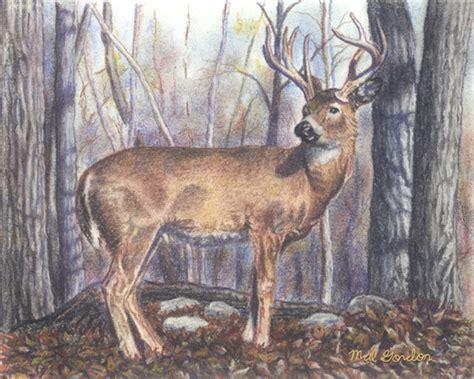Creative Streams . Pastel Art . Pastel Drawing . Wildlife ... Whitetail Buck Drawings