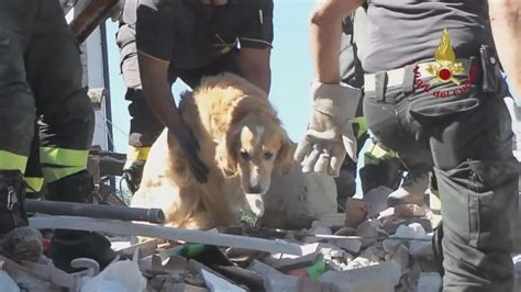 puppies rescued in italy rescued from rubble 9 days right after italy earthquake blue dot magazine