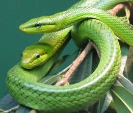 colorful snakes sujith spot most beautiful colorful venomous