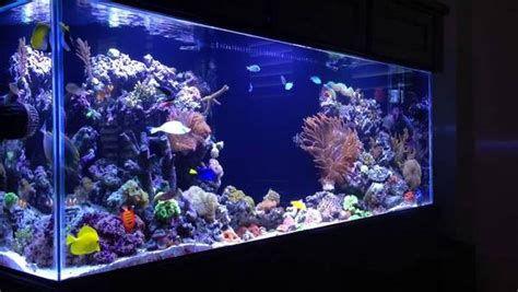 aquarium design criteria how to start a saltwater aquarium 10 useful tips for