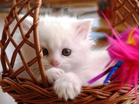 fotos de gatos fofos tudo sobre gatos