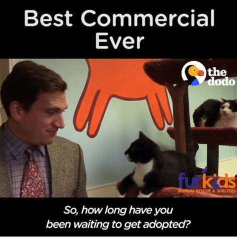 Meme Commercial - 25 best memes about best commercials best commercials memes
