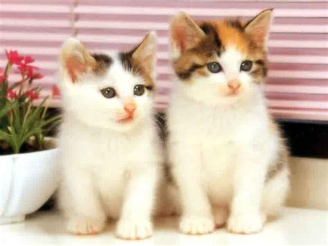 Boneka Hewan Kucing Imut 50 gambar dp bbm kucing lucu imut gemesin berbagai gadget