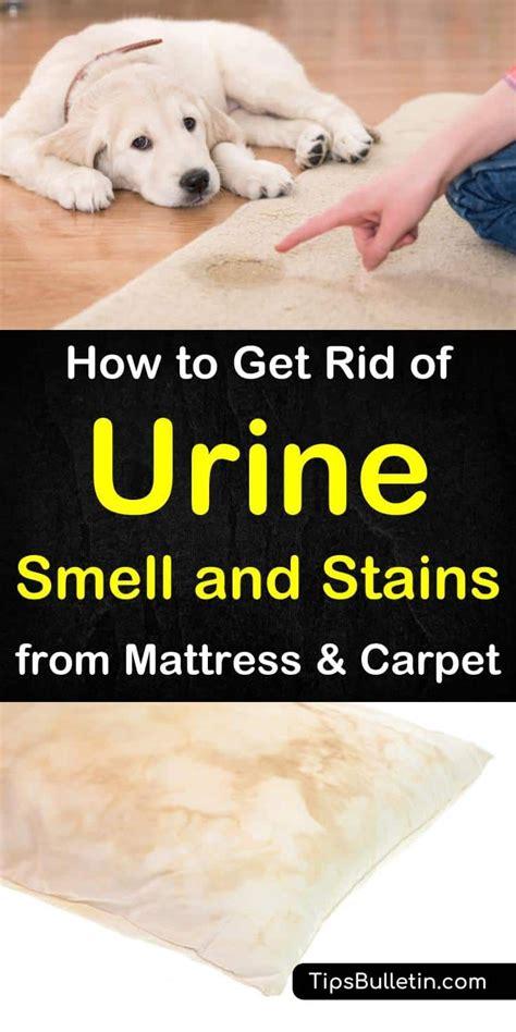 rid  urine smell  stains  mattress