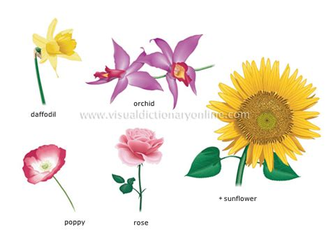 plants gardening plants flower examples of flowers 2 image visual dictionary online