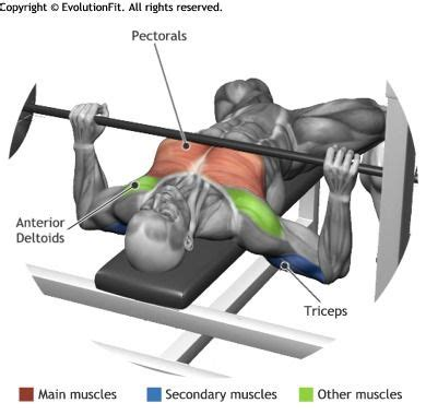 bench press only workout chest barbell bench press muscle and fitness