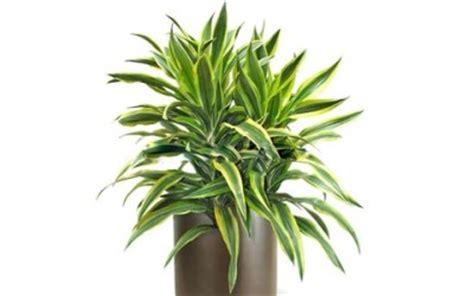 piante da appartamento come curarle piante da appartamento le migliori tuttogreen