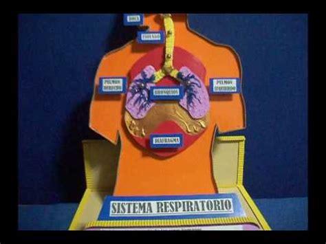 youtobe videos cmo nacer maqueta sistema respiratorio el sistema respiratorio maqueta sencilla youtube