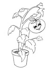 colouring images tomato plant cliparts