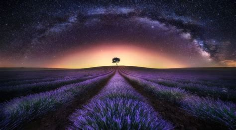 Langit Japan P photograph lavender field way i by jes 250 s m garc 237 a
