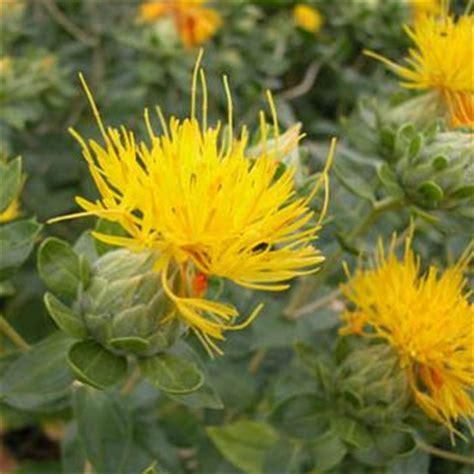 seedman s safflower seeds