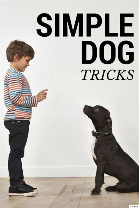 tricks to teach your puppy simple tricks you ll want to teach your