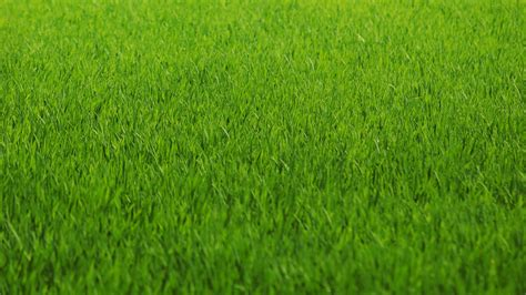 green grass wallpaper green grass wallpapers screensavers ventube com