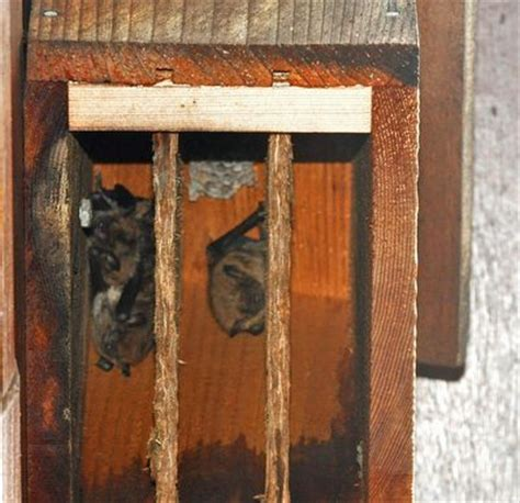 wasp nests in my bat box the zen birdfeeder