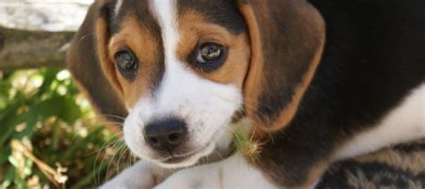 xylitol dogs warning about xylitol and dogs daily laboratories