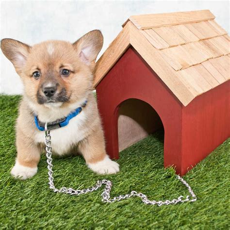 size of dog house the complete guide to dog house sizes paw castle