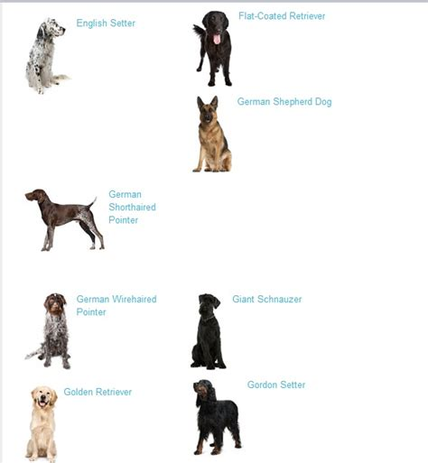 large breeds list breeds list