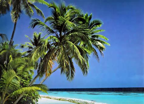 with palm tree island palm trees on palm island filtered photograph by
