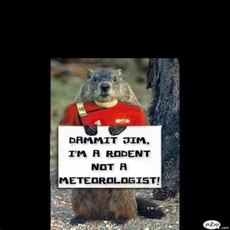 7 Reasons I Groundhog Day by 1000 Images About I Groundhogs On