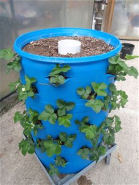 Self Watering Strawberry Planter by News From Maxi Container Inc