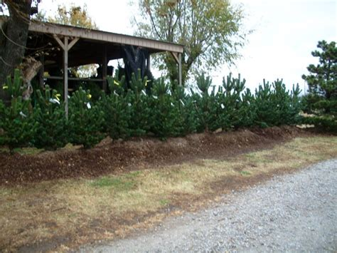 gallery of owasso christmas tree farm fabulous homes