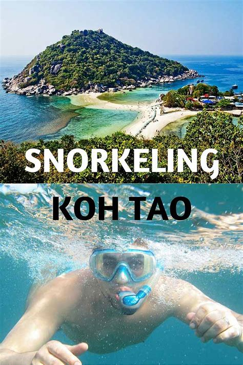 dive resort koh tao koh tao snorkeling and diving any fish sand in my suitcase
