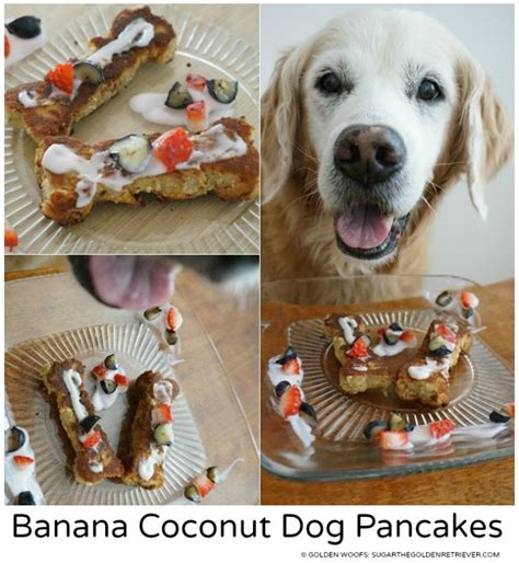can dogs pancakes banana coconut pancakes sugar the golden retriever