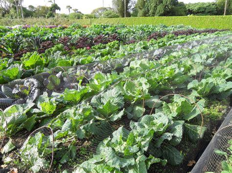 Food Garden by Food Gardens