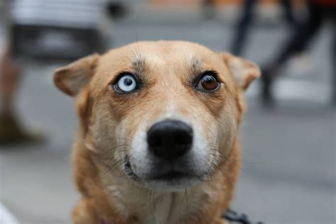 dogs with different colored humans of new york s most popular business insider