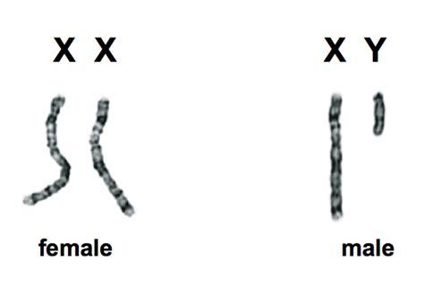 What chromosome pair determines sex
