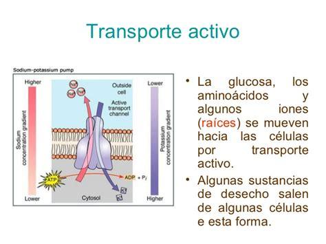 imagenes que se mueven de luto activo el transporte celular