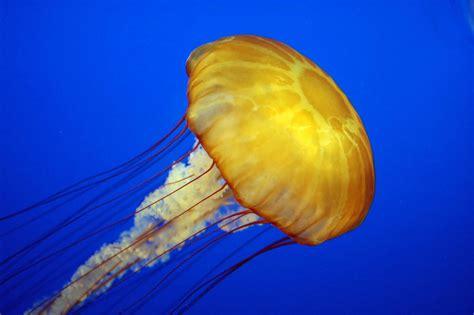 Elly Turle jellyfish