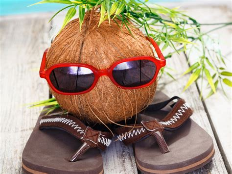 stylish coconut funny  hd wallpapers rocks