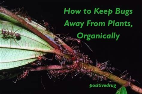 how to keep bugs away from plants organically