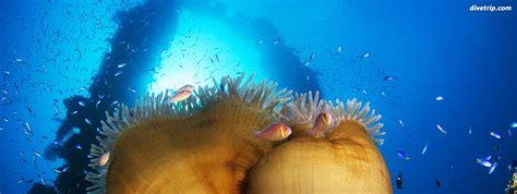 dive vacations island dreams travel scuba diving vacations cozumel scuba
