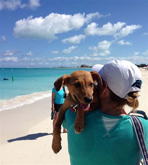 puppy adoption island puppy island a place in the caribbean where you can play and adopt puppies top13