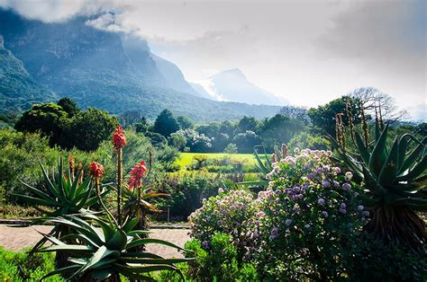 kirstenbosch botanical gardens entrance fee kirstenbosch botanical gardens entrance fee visiting