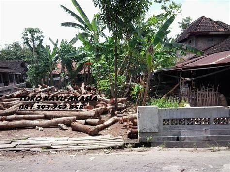 Dipan Kayu Akasia pusat kayu akasia produksi mebel meja kursi bagus klaten